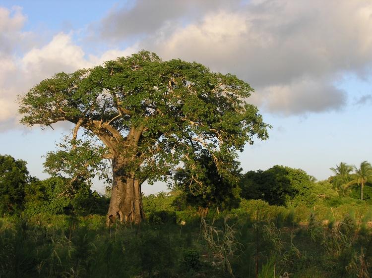 Simba Africa